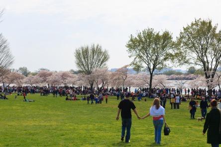 2008 DC Cherry Blossom Festival