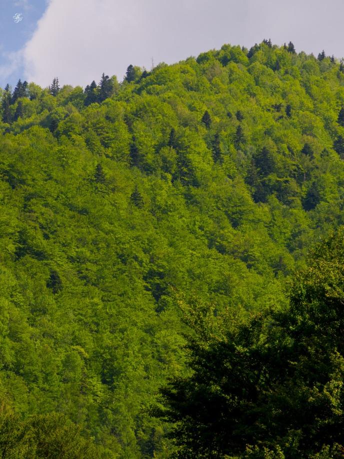Mountain slopes next to Lacul Vidra