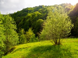 In a mountain meadow