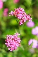 Purple flowers with bee