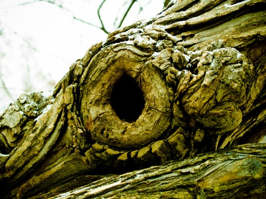 Hole in tree trunk, Grosvenor Park, North Bethesda, MD, USA.
