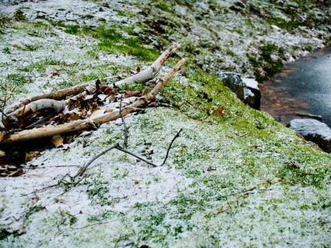 Grass and snow, Grosvenor Park.