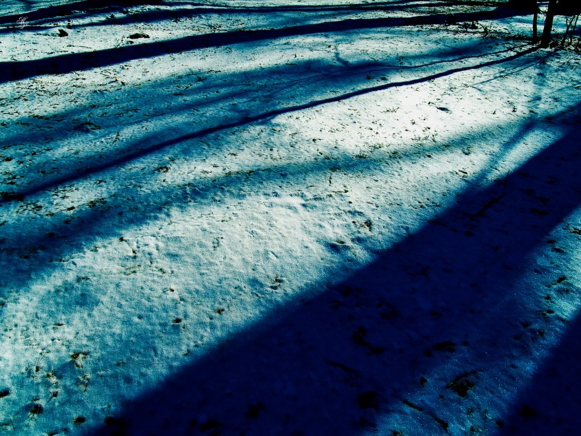 Snow on the ground, Cabin John Regional Park, MD, USA.