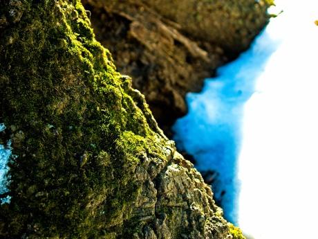 Moss growing on a tree trunk, winter, Cabin John Regional Park, MD, USA.