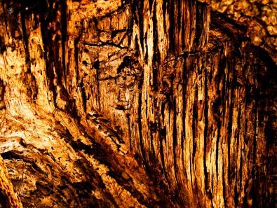 Rotten wood, fallen tree trunk, Cabin John Regional Park, MD, USA.