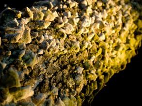 Lichen growing on rotting tree trunk, Cabin John Regional Park, MD, USA.