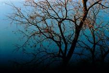 Bare tree, winter, Washington, DC, USA. 35mm film, Exakta EXA Ia.