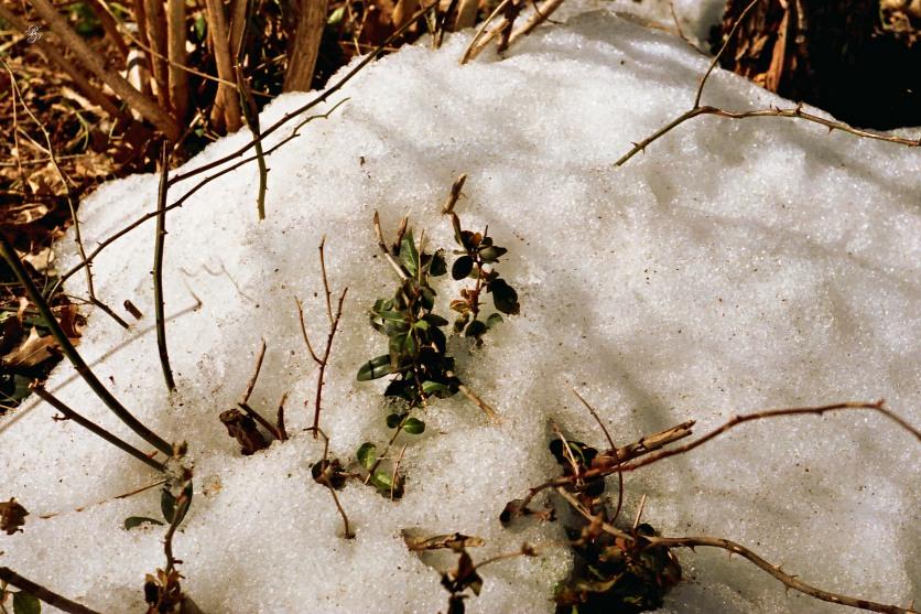 Snow, Rock Creek Park.