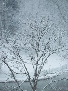 Scene from a late winter snow storm