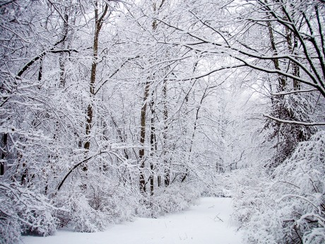 After a late winter snow storm, Grosvenor Park, North Bethesda, MD, USA.