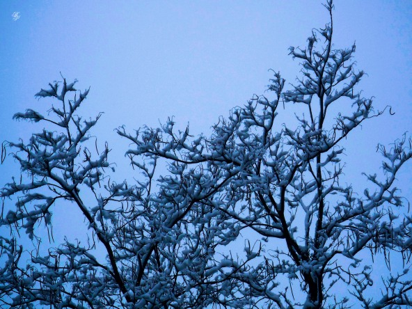 Branches and a blue sky