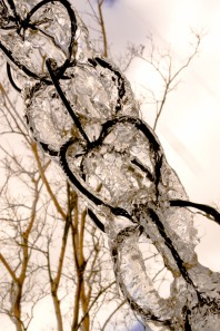 Ice on chain links. National Arboretum, Washington, DC, USA.