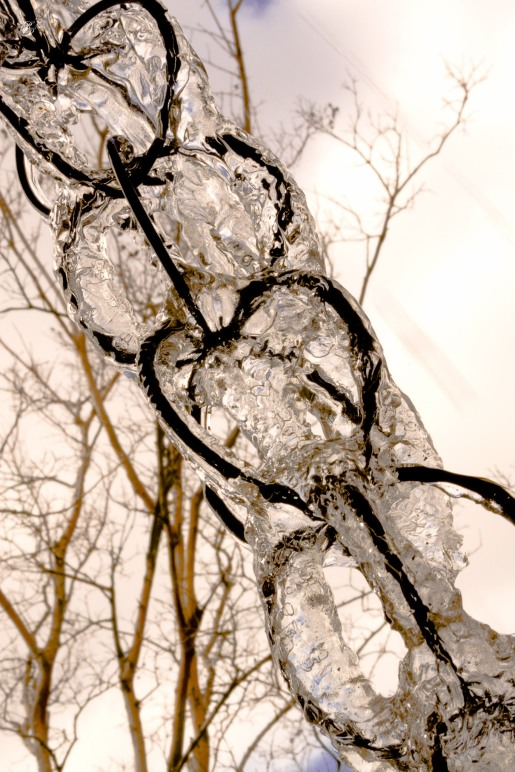 Ice on chain links. National Arboretum, Washington, DC, USA.