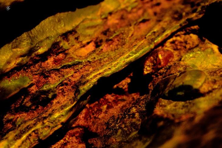 Texture of a sculpted rock. National Arboretum, Washington, DC, USA.