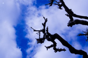 Bare branches pointing toward the sky. National Arboretum, Washington, DC, USA.
