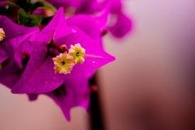 Purple flower, macro, National Arboretum, Washington, DC, USA.