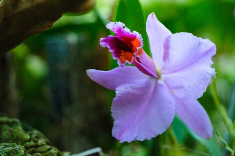 Flight of the blue orchid