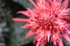 Pink and spiky