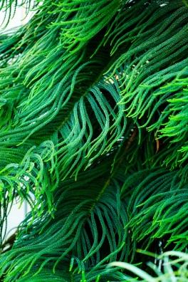 Evergreen embrace