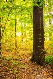 A walk through the forest