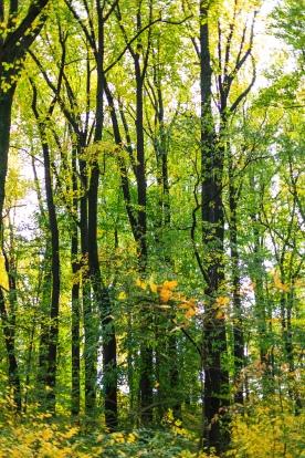 Tall trees