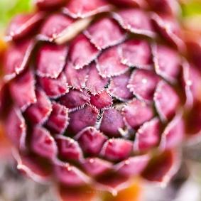 Soft cactus