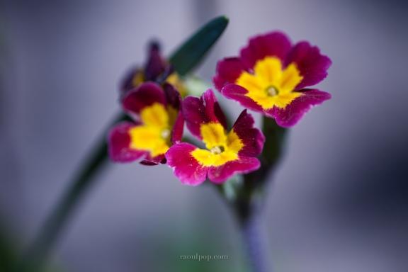 Lovely little flowers