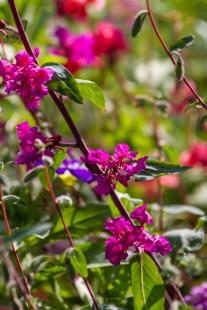 Flori de Vara