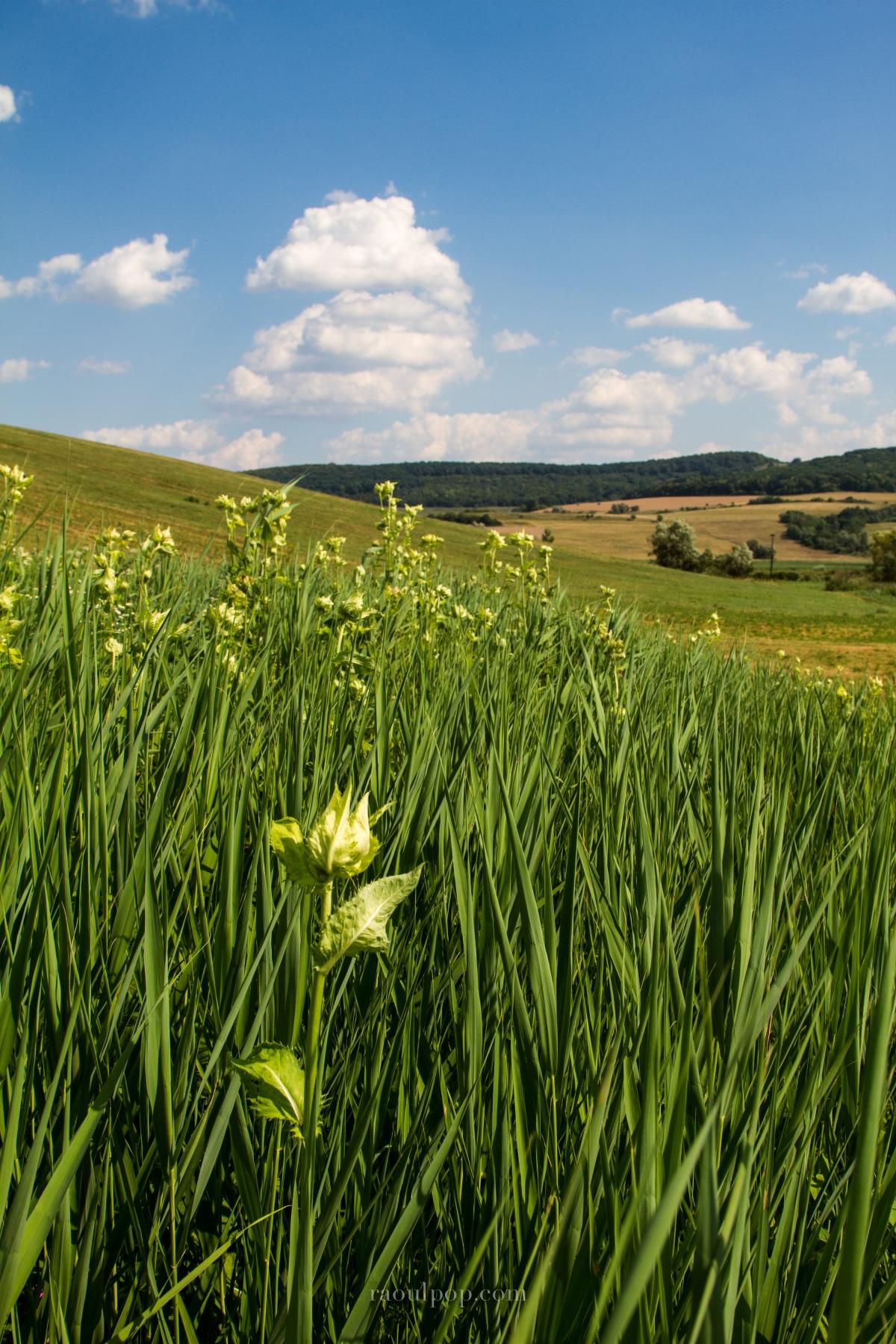 Panoramas from SouthernTransilvania
