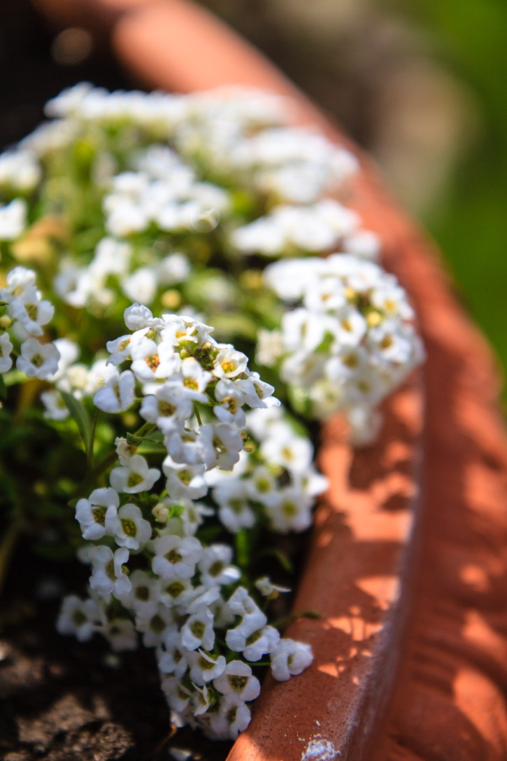 Flowers from our garden