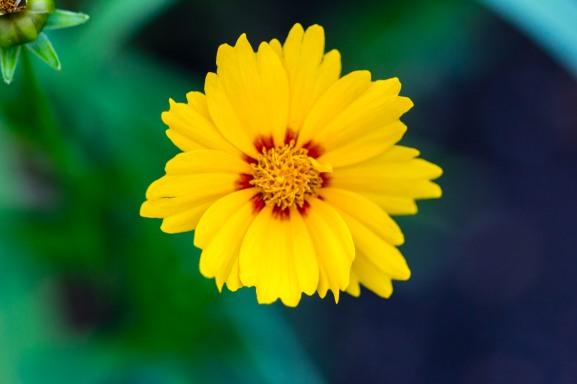 Red heart, yellow petals