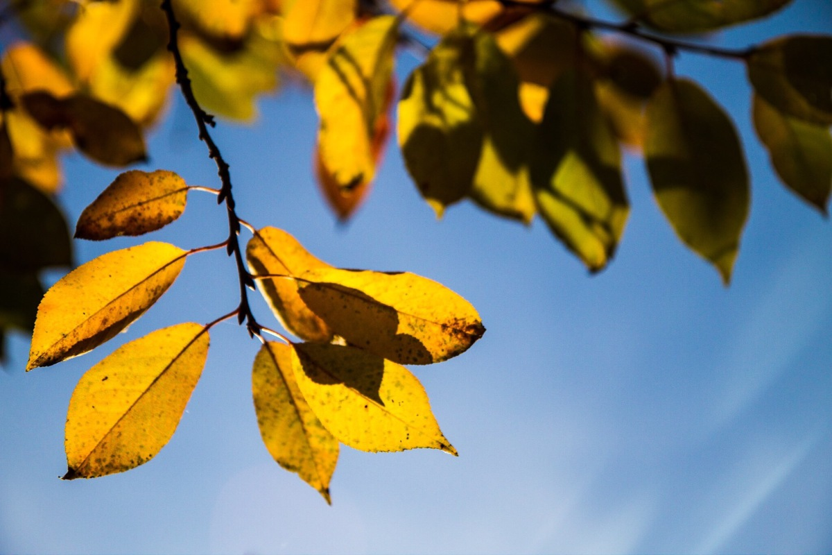 A sunny autumnday