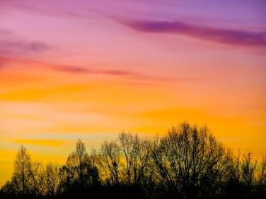 Dawn, January morning, Grosvenor Park.