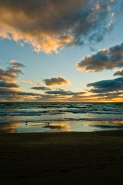 Sandpipers pace the beach at dawn. Hollywood, Florida, USA.