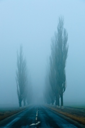 A long, straight road, lined with poplar trees and covered in fog. Somewhere in Dobrogea, Romania.