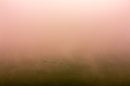 Two ducks were paddling in the fog...