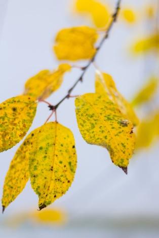 I love their dappled foliage in autumn