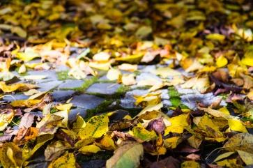 Sunlight among fallen cherry leaves