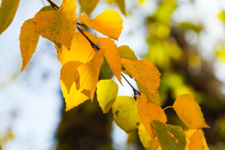 Autumn, Mediaș, România