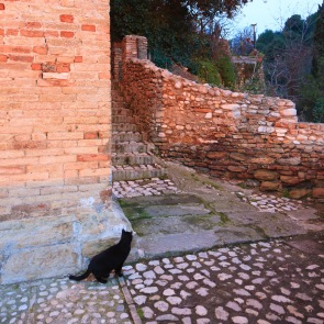 A black cat from the medieval city of Grottammare, Italy.