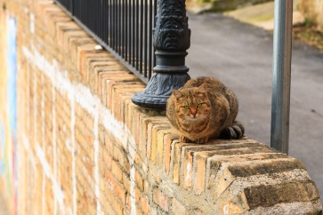 A wonderful and sociable tomcat from the medieval city of Grottamare, Italy. Remarkably similar to our own Bubu.
