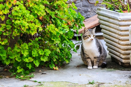 Another adorable cat from the medieval city of Grottammare, Italy.