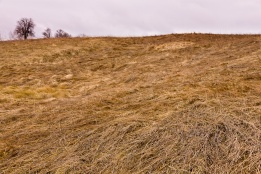 Tall grass, blown every which way by the wind and dried by the same, covers this abrupt hillside somewhere in Moldova, Romania.