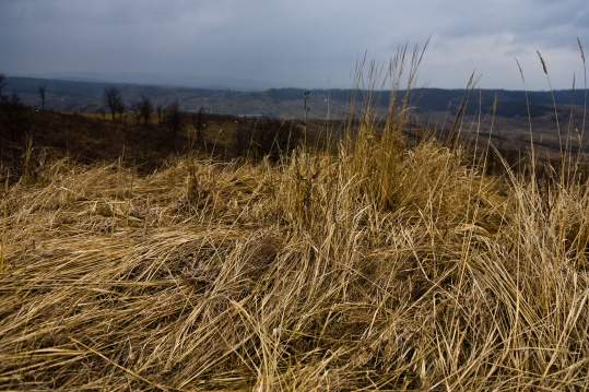 Tall grass, dried by the long winter and downed by strong winds, on a hilltop somewhere in Moldova, Romania.