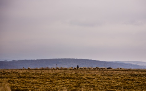A shepherd tends to his flock of sheep on a distant hilltop.