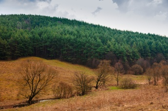 A thick forest of conifers cover the hill in the background while a quiet little stream winds its way through thickets and sparse trees in the valley below.