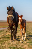 A mare and its foal