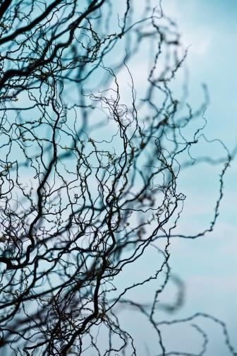 The convoluted and twisted branches of a tree are set against a bright blue sky.
