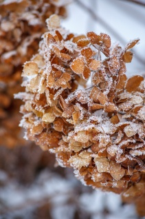 Hoar frost on a cold January morning, Medias, Romania