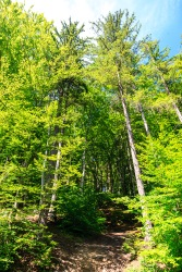 A forest path to the Rasnov citadel
